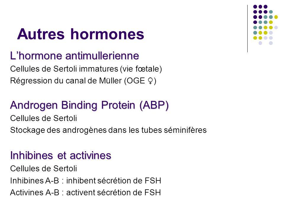 hormone anti mullerienne