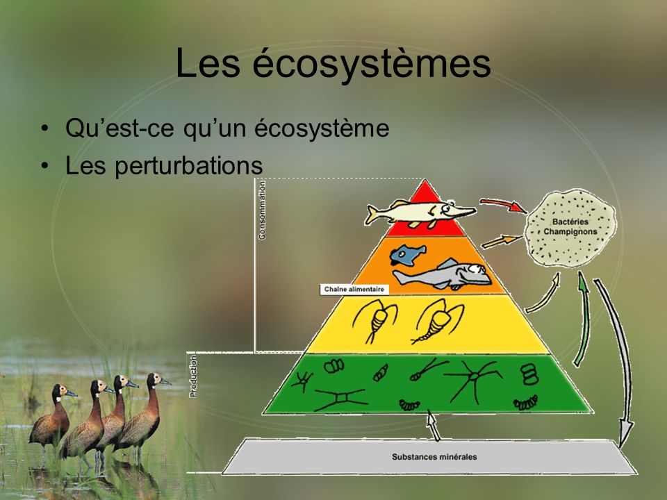 Univers Vivant Les écosystèmes Ppt Video Online Télécharger