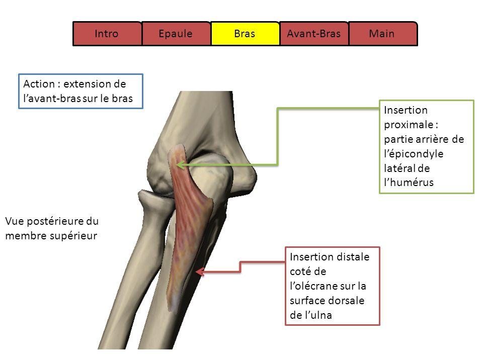 Charmant Anatomie Des Distalen Humerus Galerie - Anatomie Von ...