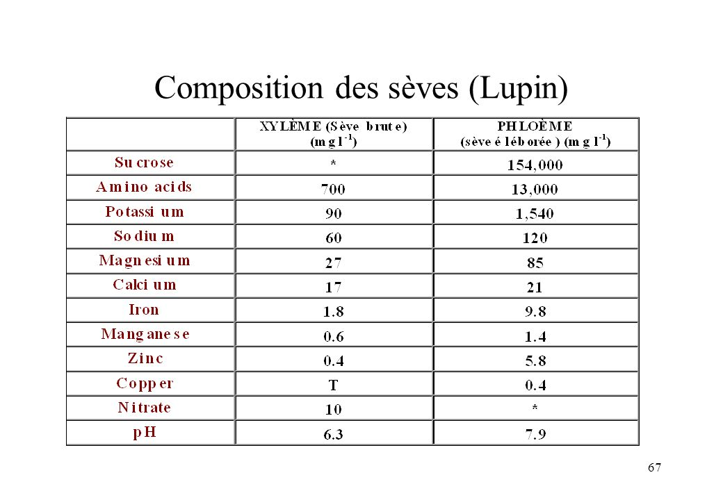 Composition des sèves (Lupin)