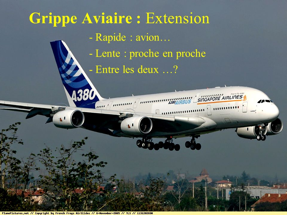 Grippe Aviaire : Extension