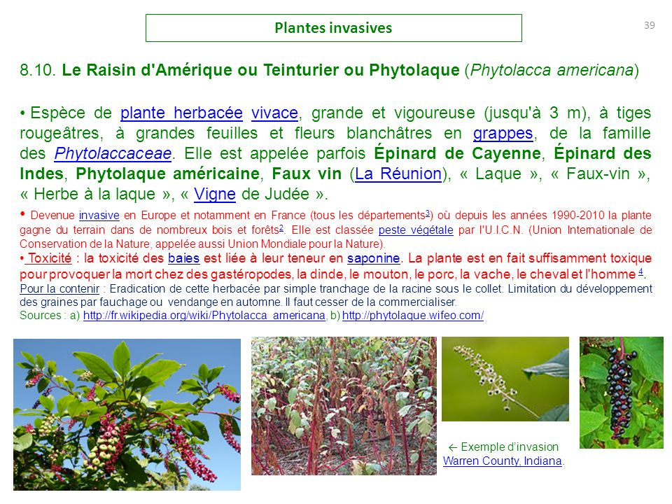 les plantes invasives les plantes envahissantes en france en europe et ailleurs la berce du. Black Bedroom Furniture Sets. Home Design Ideas