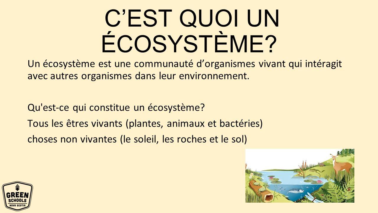 Les écosystèmes énergie Ppt Télécharger