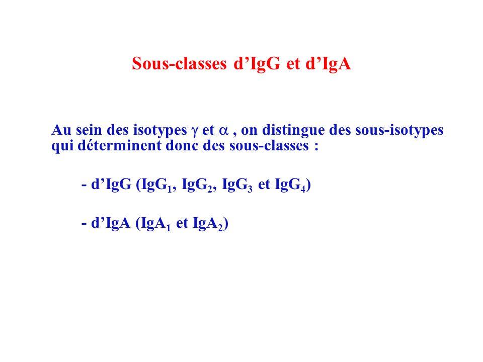 sous classes igg