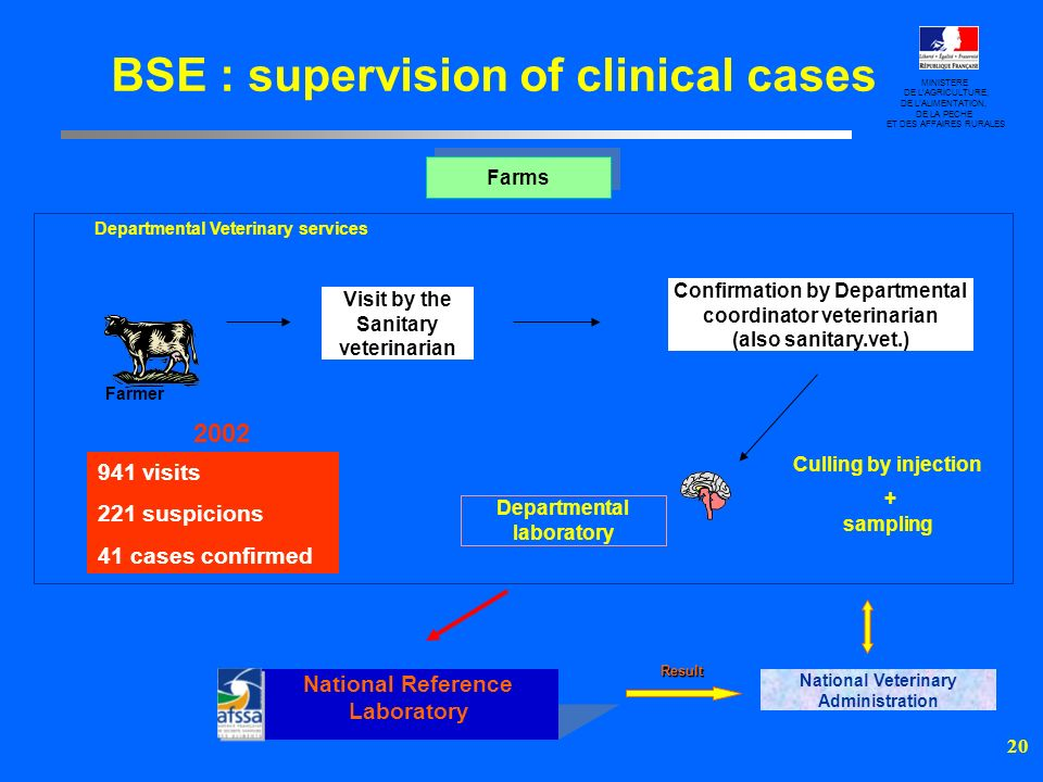 BSE : supervision of clinical cases