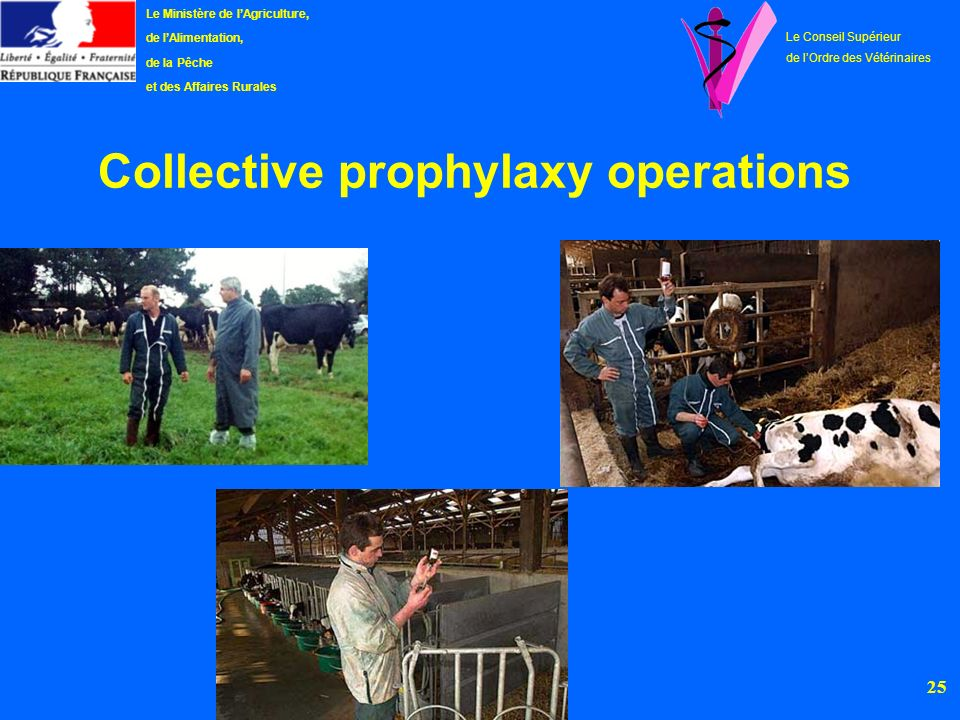Collective prophylaxy operations