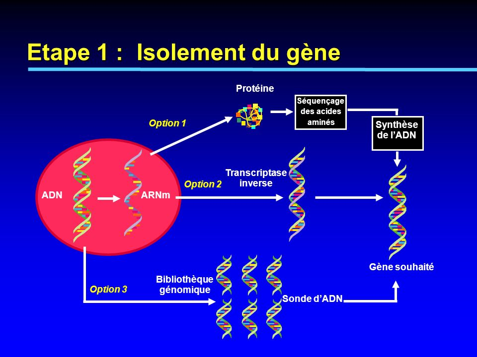 Etape 1 : Isolement du gène