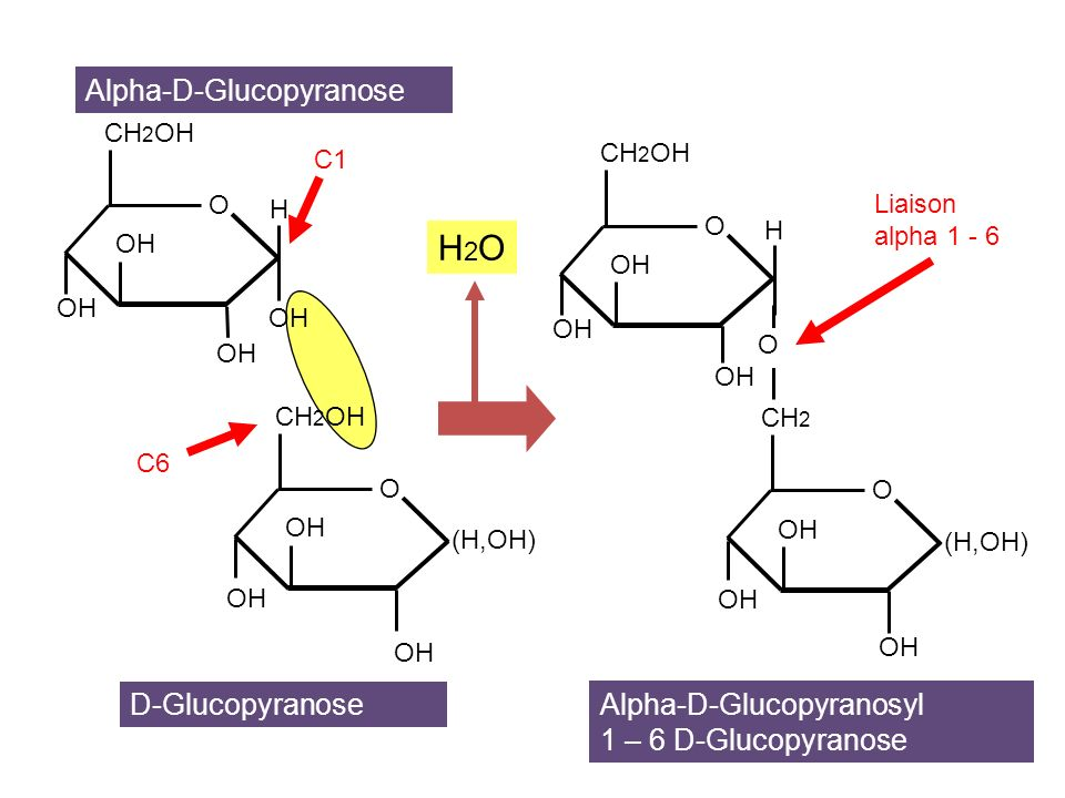 L Glucofuranose Les glucides. -...