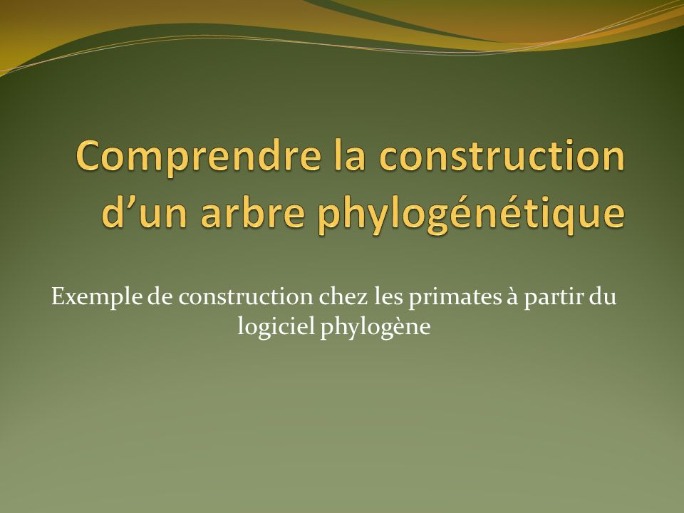 Comprendre la construction d'un arbre phylogénétique