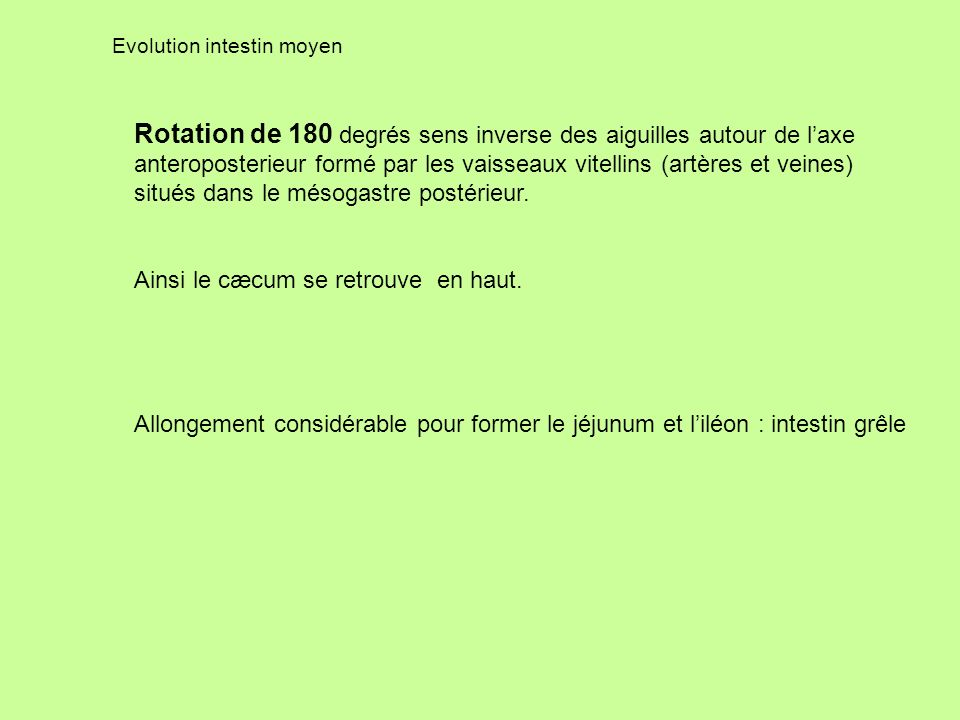 Evolution intestin moyen