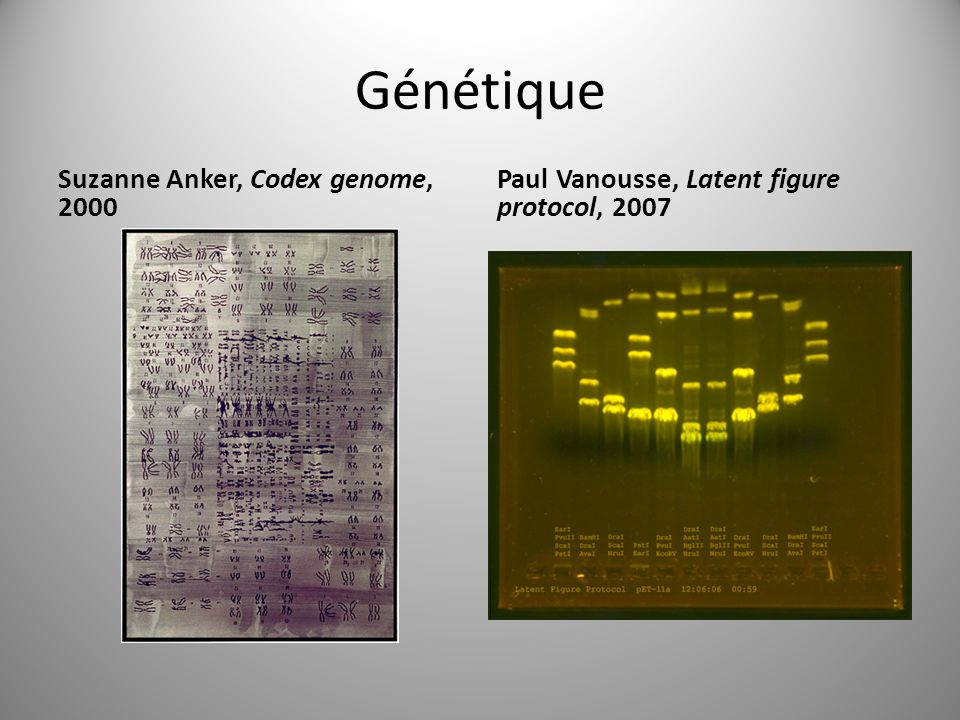 Génétique Suzanne Anker, Codex genome, 2000