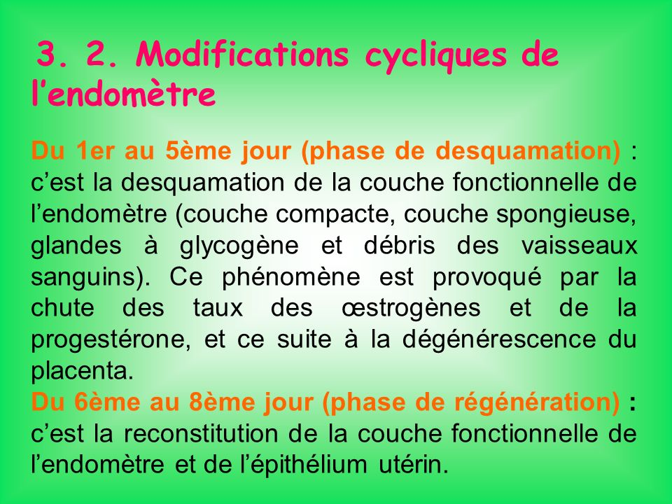 3. 2. Modifications cycliques de l'endomètre
