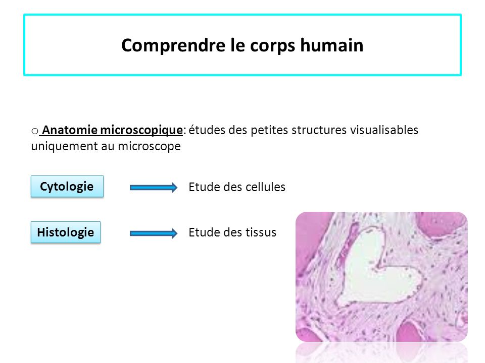 Comprendre le corps humain