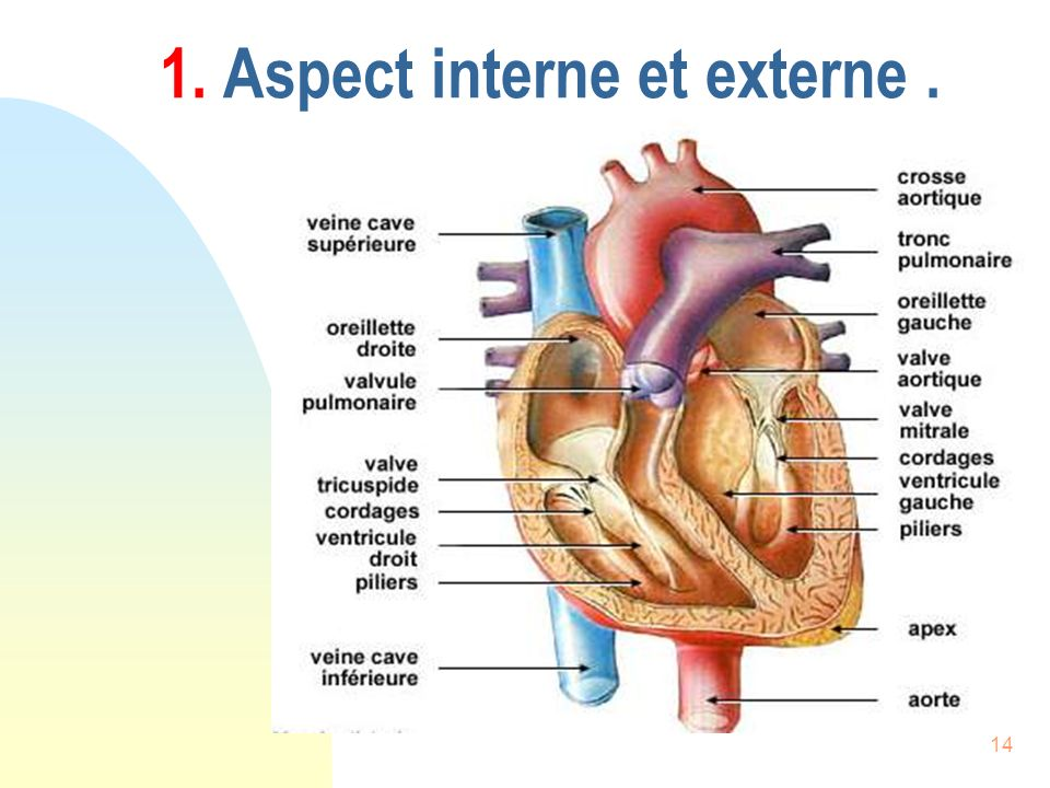 1. Aspect interne et externe .