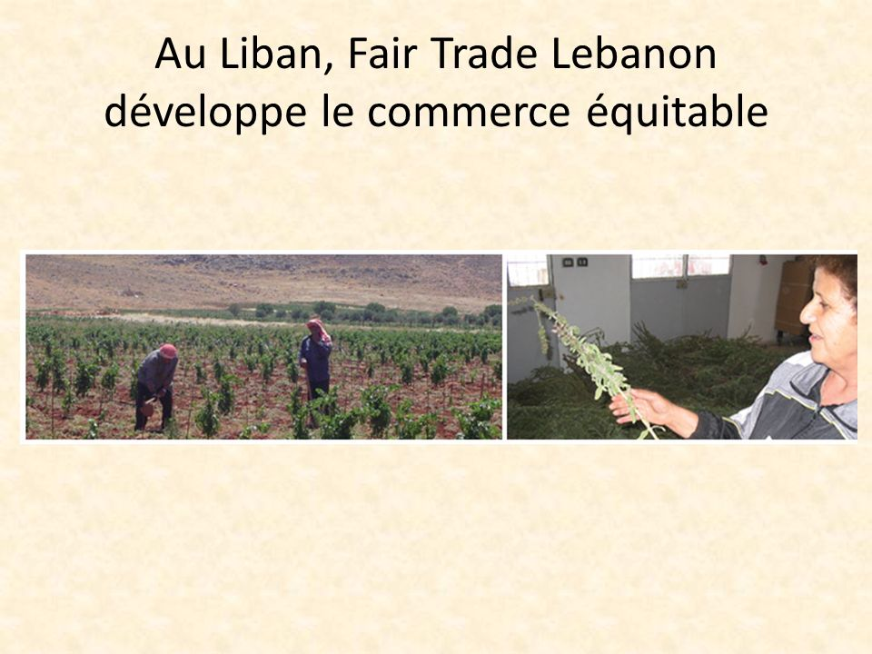 Au Liban, Fair Trade Lebanon développe le commerce équitable