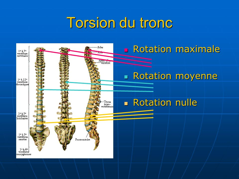 Torsion du tronc Rotation maximale Rotation moyenne Rotation nulle