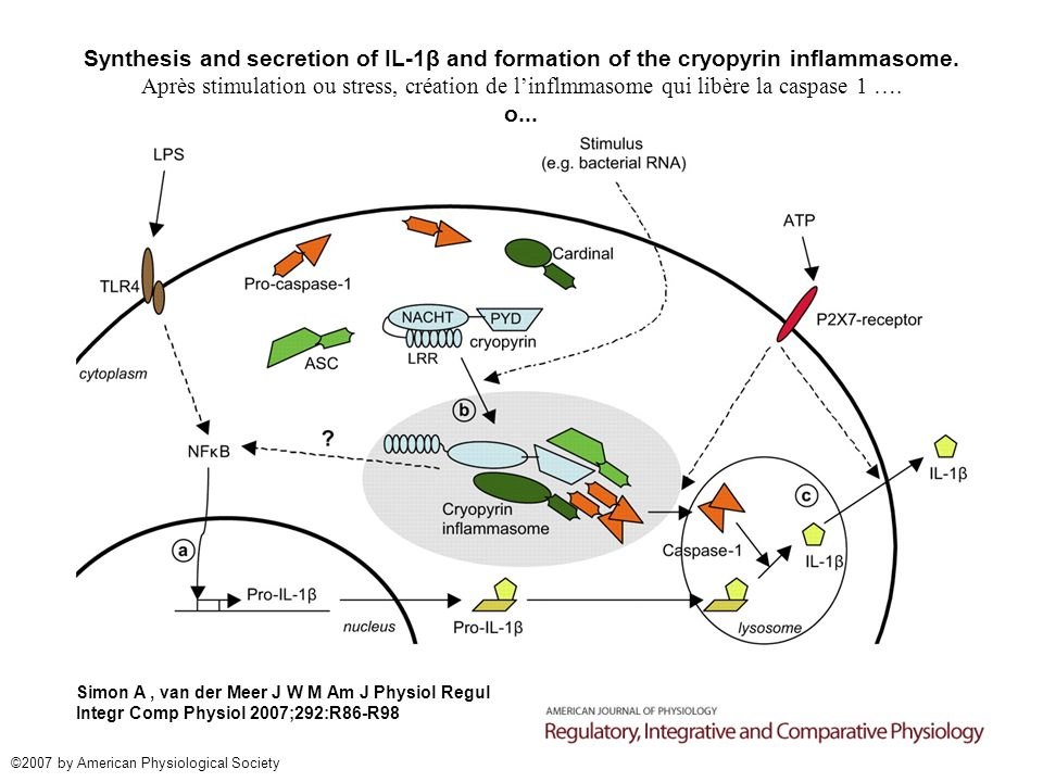 Synthesis and secretion of IL-1β and formation of the cryopyrin inflammasome.