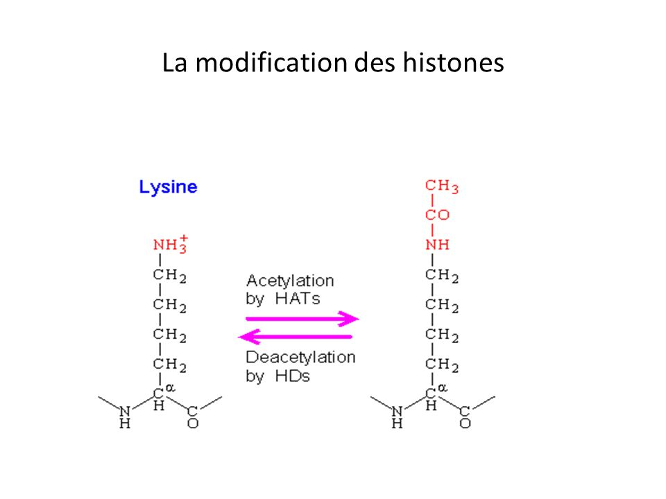 La modification des histones