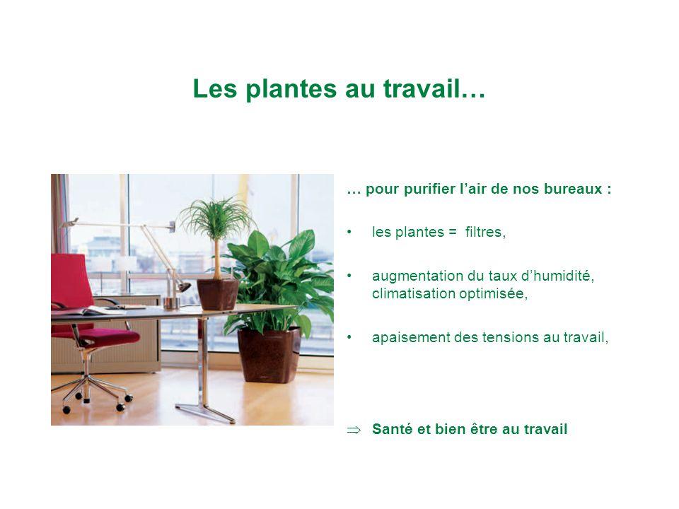 plantes et bien tre sur le lieu de travail nathalie. Black Bedroom Furniture Sets. Home Design Ideas