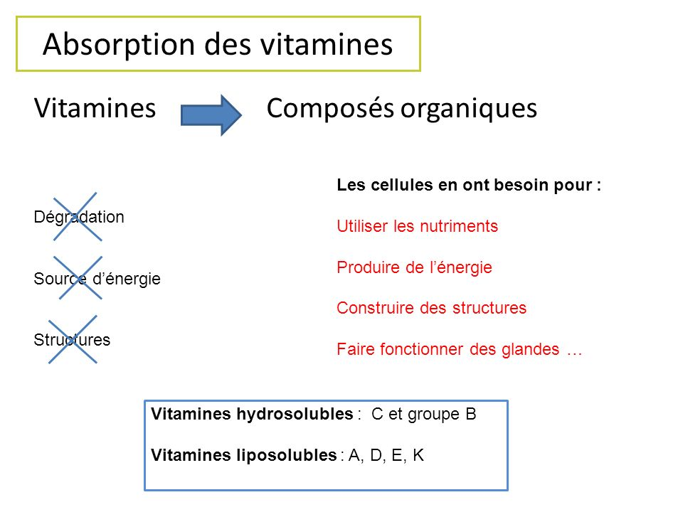 Absorption des vitamines