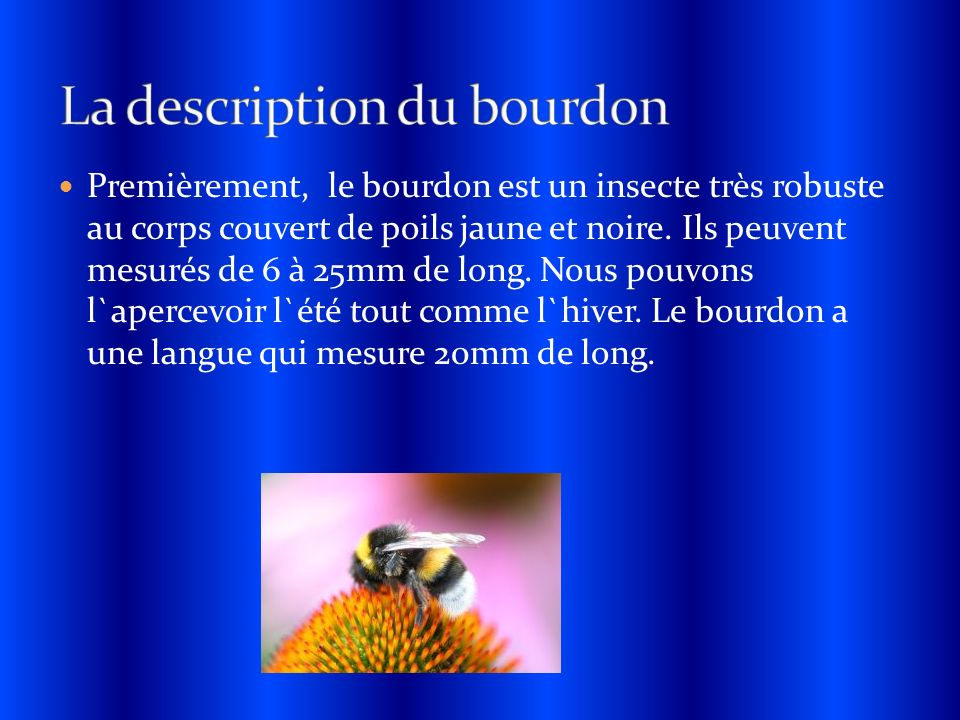 La description du bourdon
