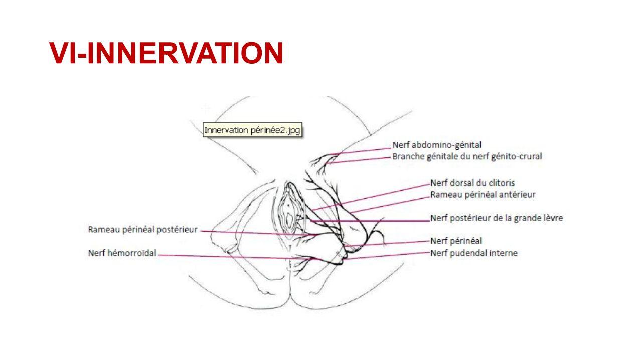 anatomie du p rin e f minin ppt t l charger. Black Bedroom Furniture Sets. Home Design Ideas