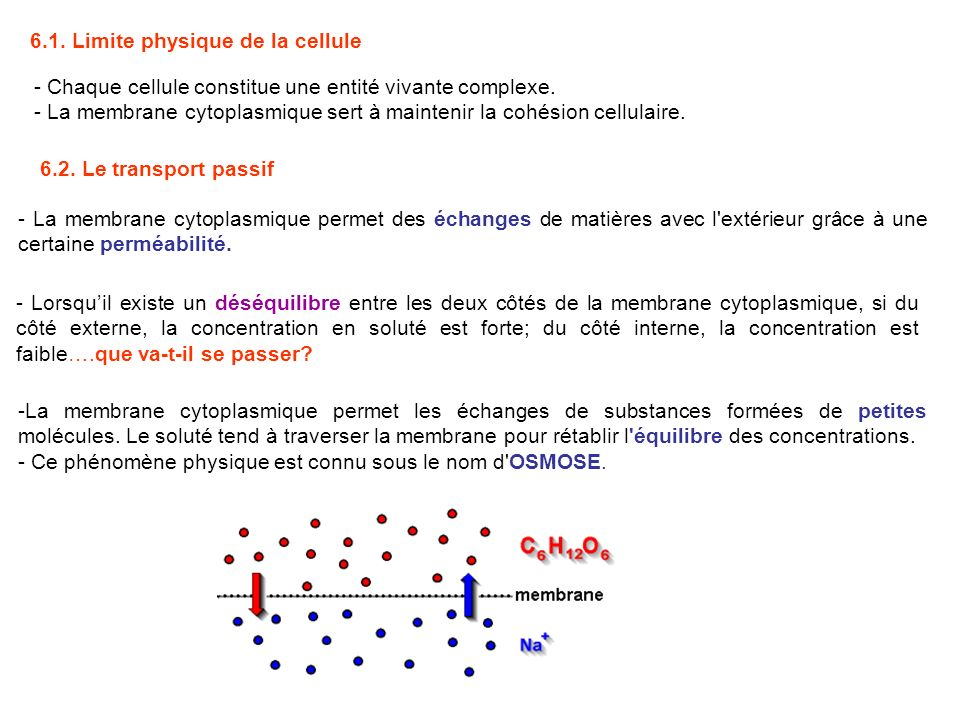 6.1. Limite physique de la cellule