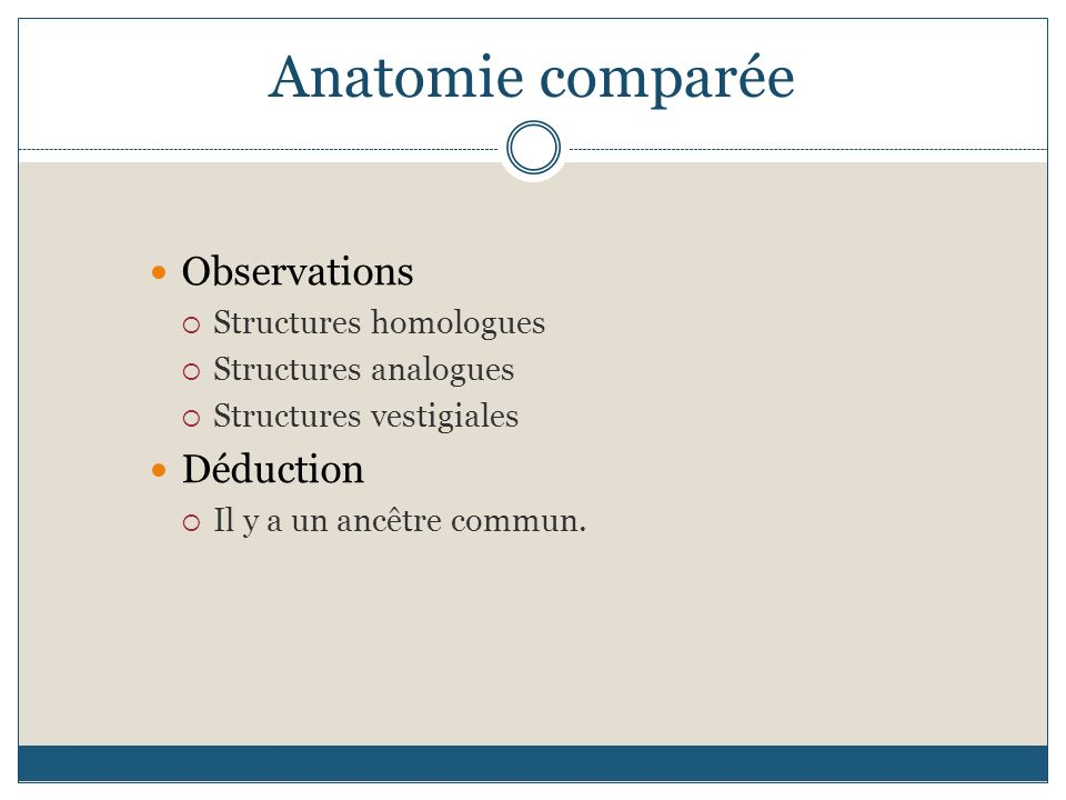 Anatomie comparée Observations Déduction Structures homologues