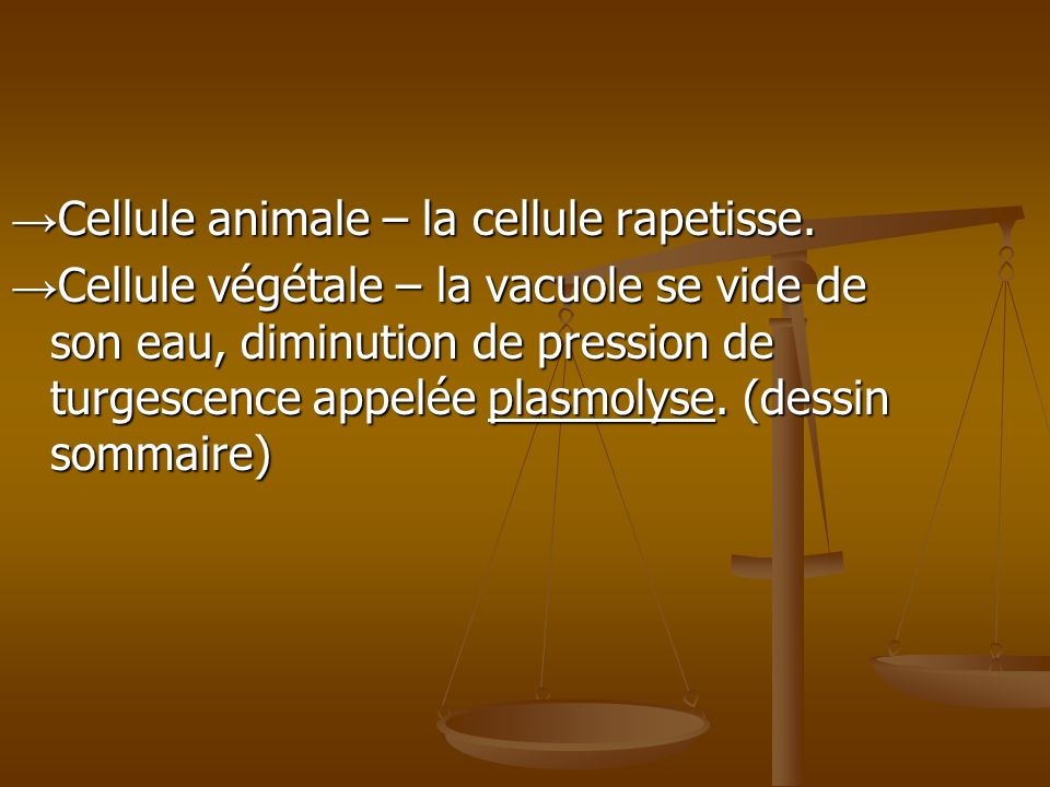 →Cellule animale – la cellule rapetisse.