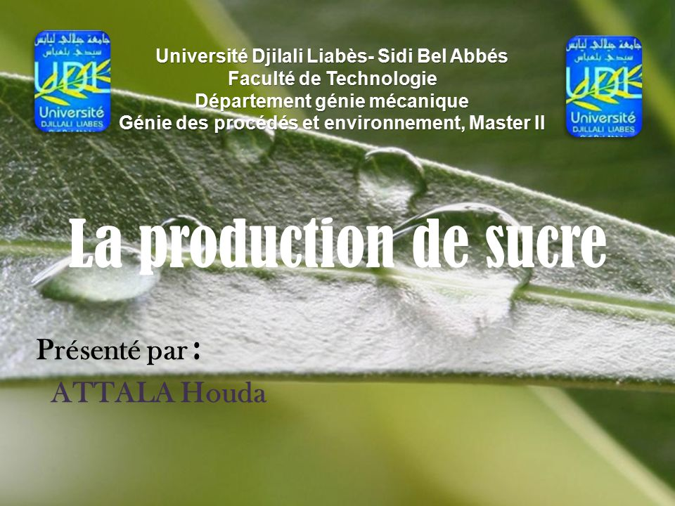 fabrication du sucre de canne pdf