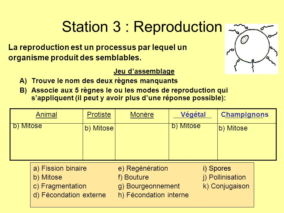 Station 3 : Reproduction