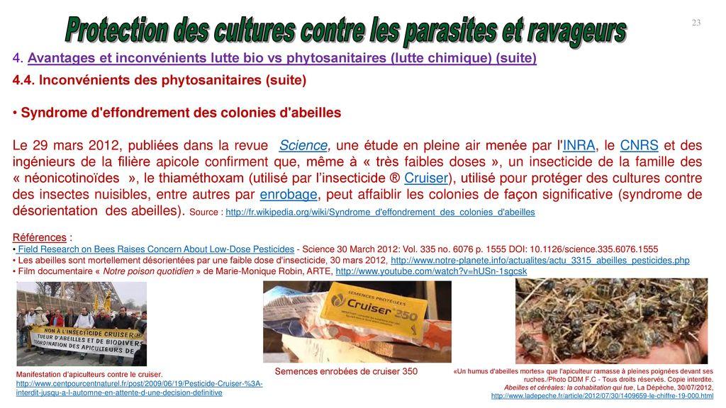 150 g biologique Moisissure Verte tuer termite mort Metarhizium anisopliae