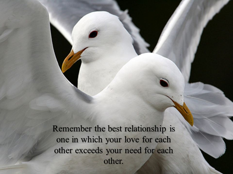 Remember the best relationship is one in which your love for each other exceeds your need for each other.