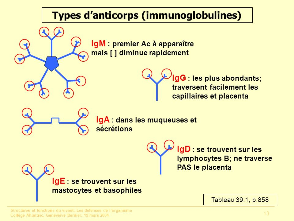 Types d'anticorps (immunoglobulines)