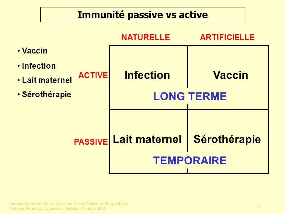 Immunité passive vs active
