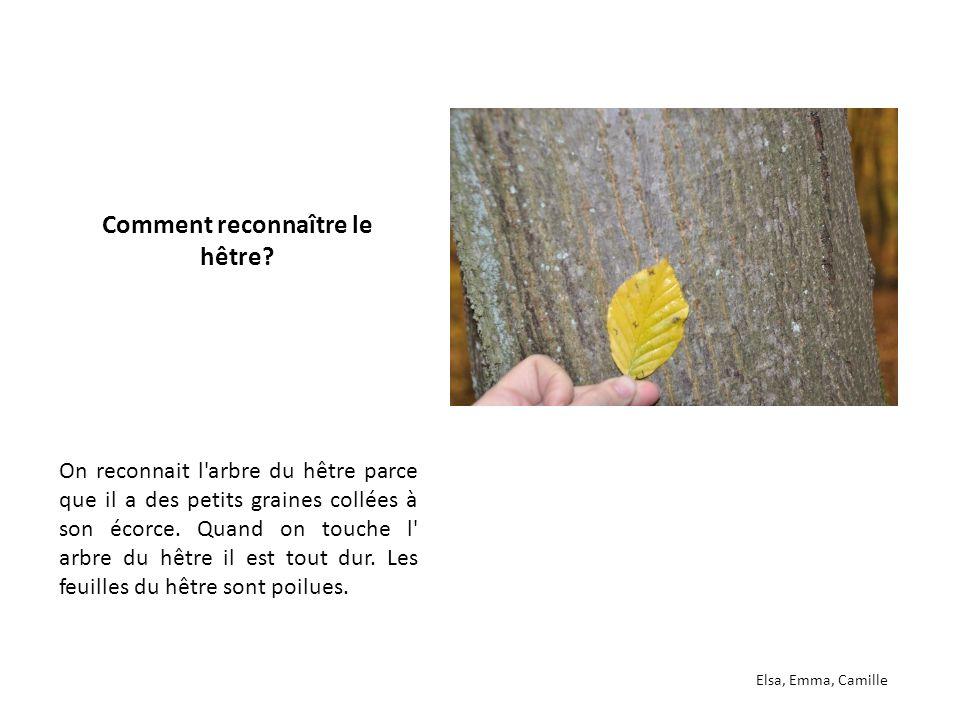 Préférence Qu'est-ce qu'un arbre têtard? - ppt télécharger TR52