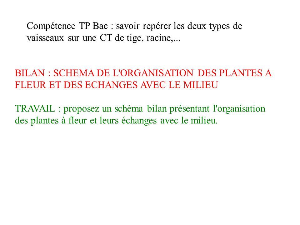 Chapitre 1 Organisation Des Plantes A Fleur Et Vie Fixee Ppt