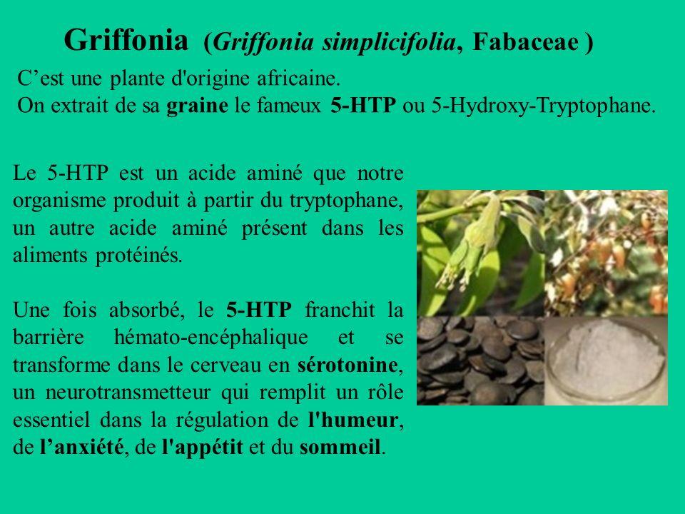 danger griffonia simplicifolia