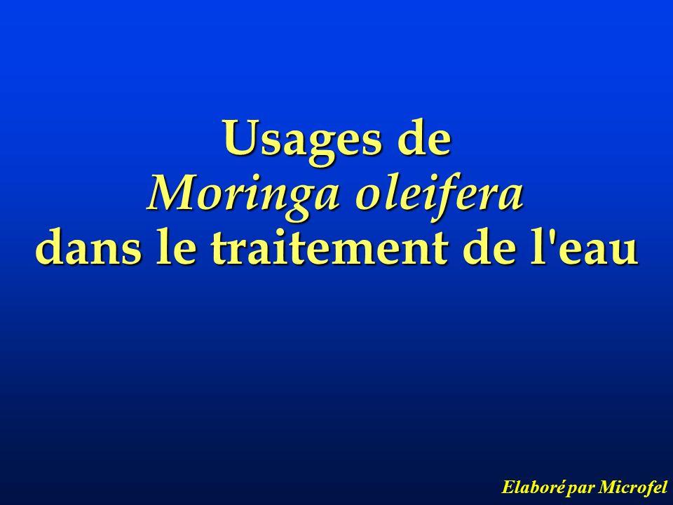 moringa oleifera lamarck ppt video online t l charger. Black Bedroom Furniture Sets. Home Design Ideas