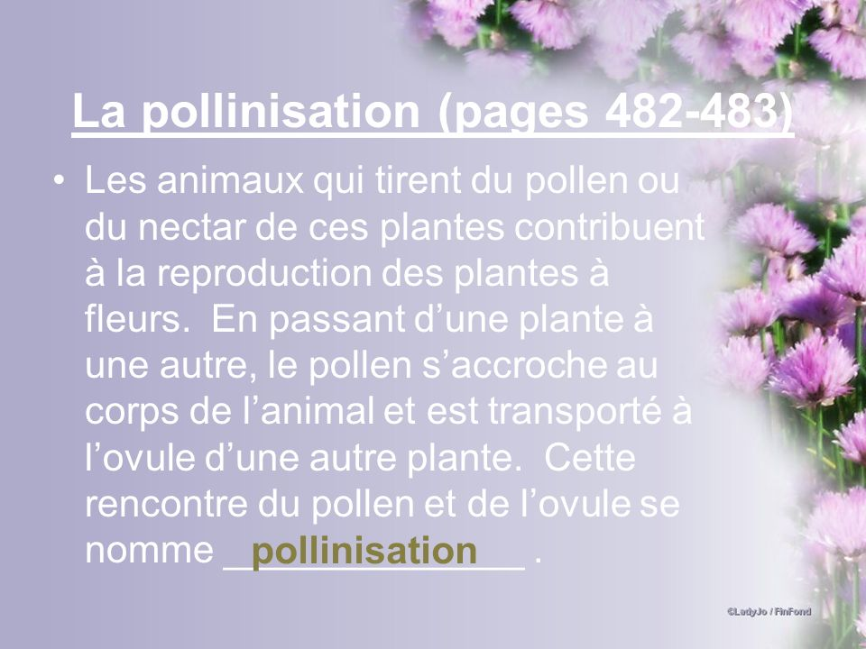 La pollinisation (pages )