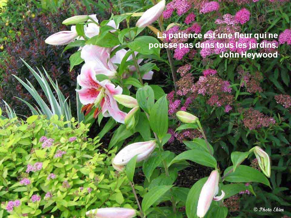 fleurs de mon jardin 1 fleurs de mon jardin ppt video online t l charger. Black Bedroom Furniture Sets. Home Design Ideas