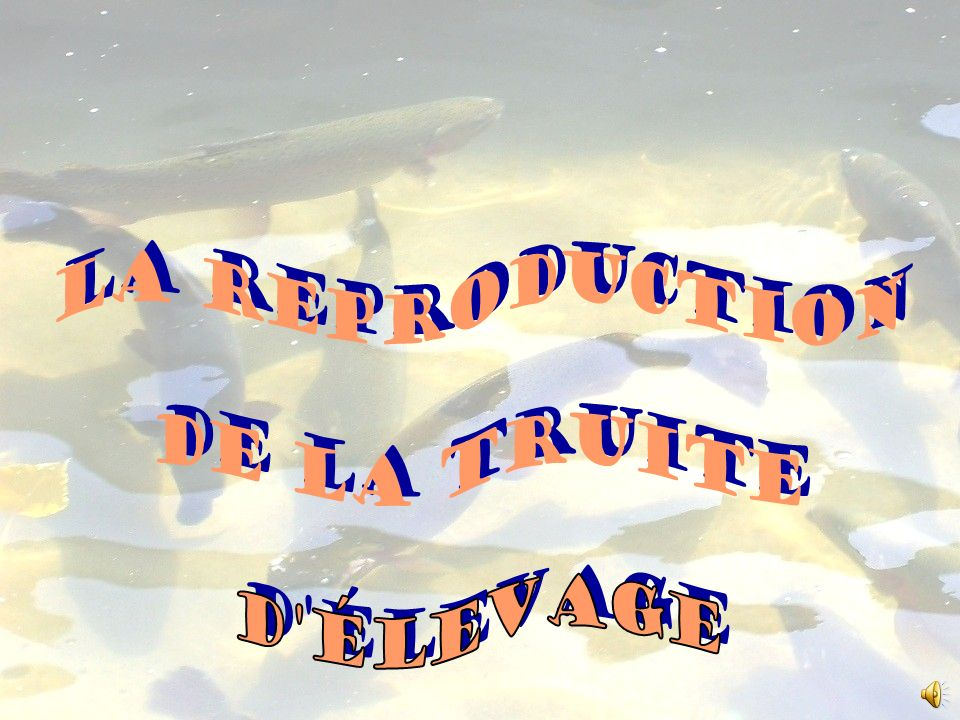 La reproduction de la truite d élevage