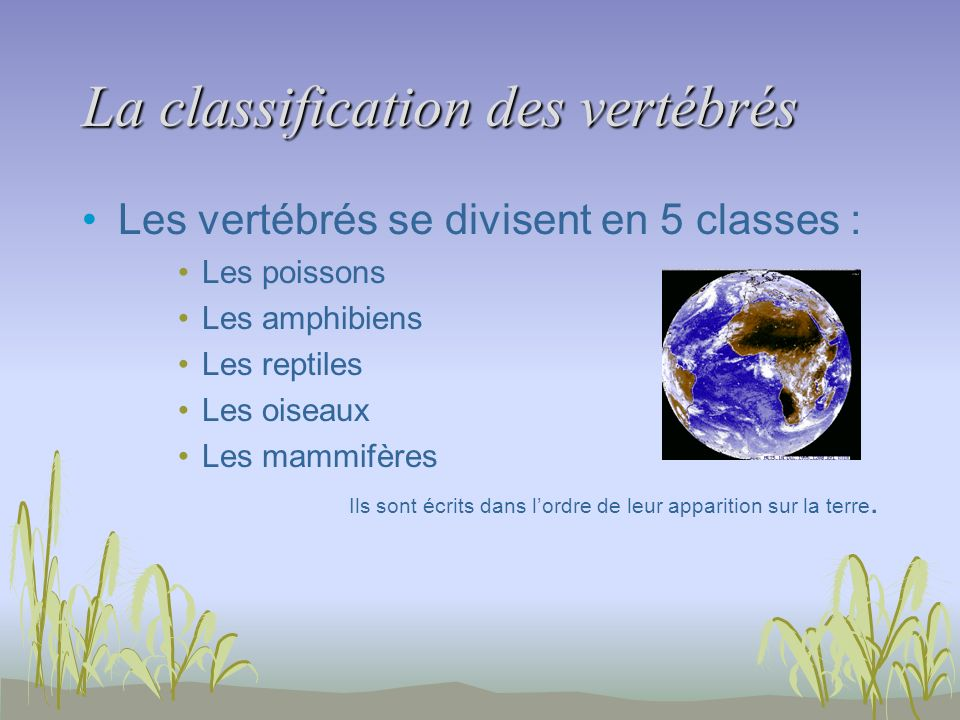 La classification des vertébrés