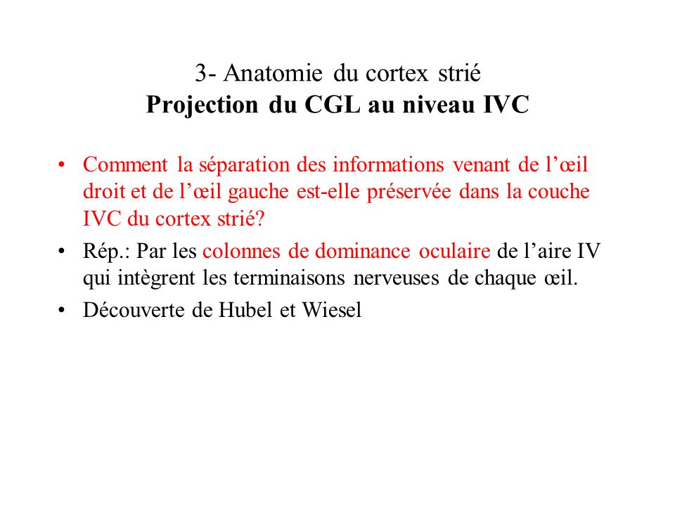 3- Anatomie du cortex strié Projection du CGL au niveau IVC