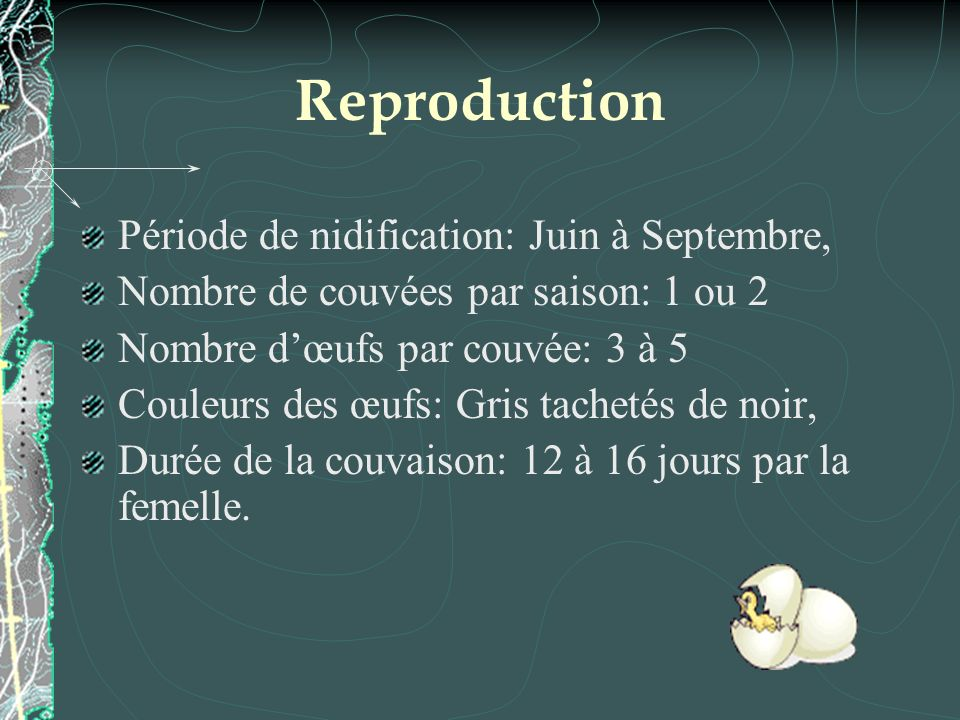 Reproduction Période de nidification: Juin à Septembre,