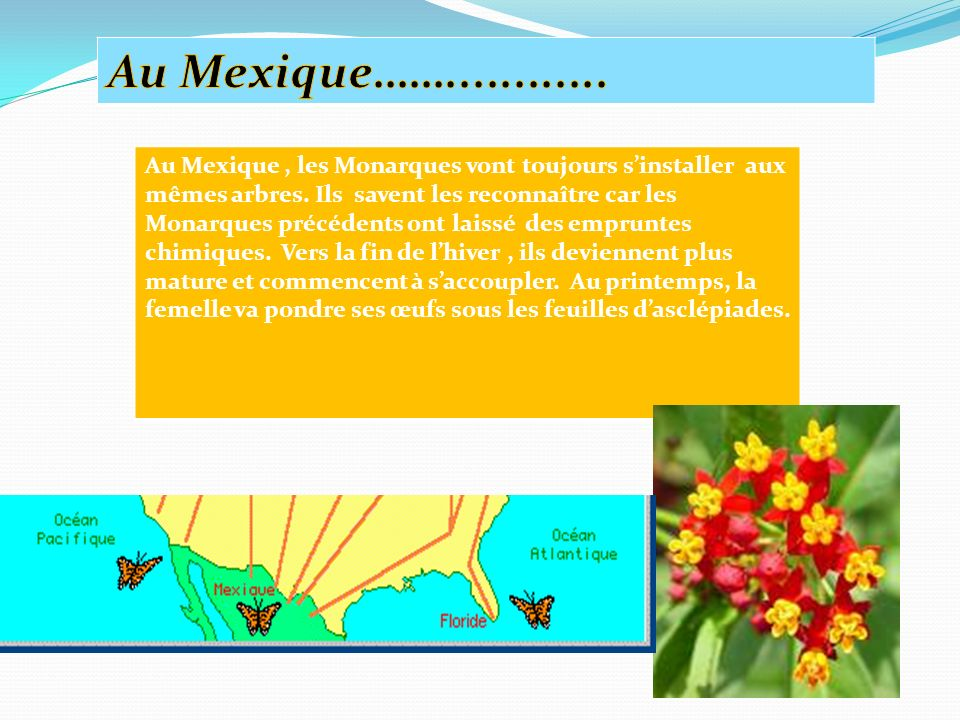 Au Mexique……
