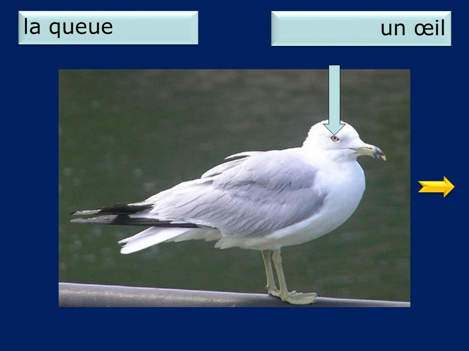 la queue un œil 2