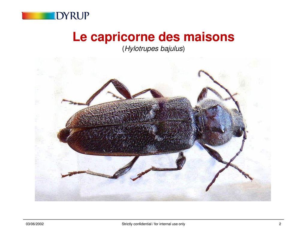 les insectes larves xylophages ppt t l charger. Black Bedroom Furniture Sets. Home Design Ideas
