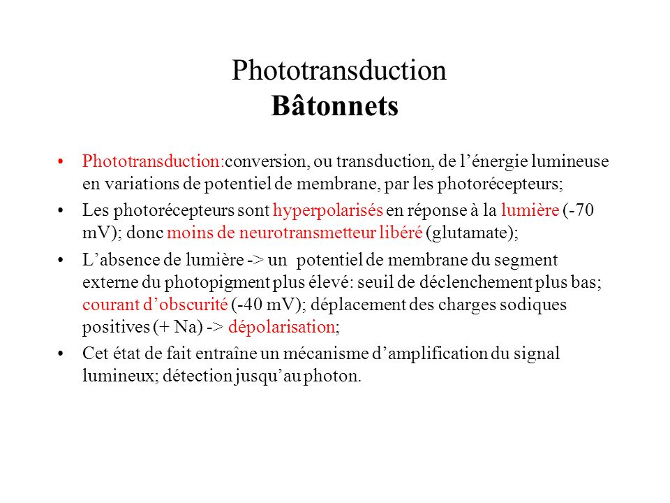 Phototransduction Bâtonnets