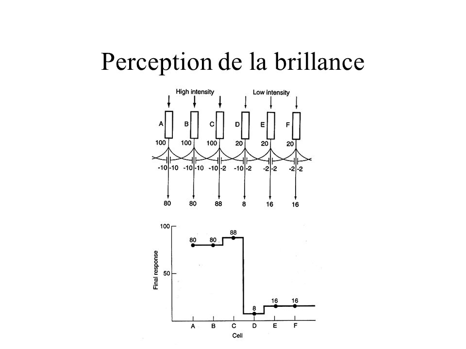 Perception de la brillance